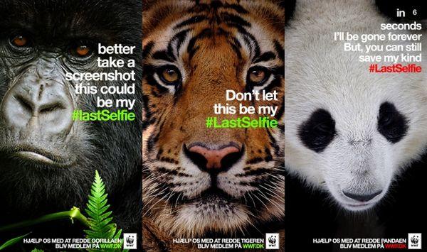 WWF Snapchat Campaign